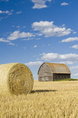 old barn and round durum wheat straw bales near Ponteix, Saskatchewan, Canada