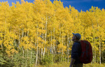 a hiker looks out over apsen trees in autunm colours,  Duck Mountain Provincial Park, Manitoba, Canada