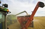 a combine unloads spring wheat into a grain wagon on the go, near St. Leon, Manitoba, Canada