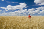 a man in a mature, harvest ready durum wheat field, near Ponteix, Saskatchewan, Canada