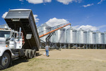 a farmer unloads a grain truck loaded with durum wheat into a grain storage bin during the harvest, near Ponteix, Saskatchewan, Canada
