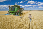 farmer  in front of his combine during the durum wheat harvest, near Ponteix, Saskatchewan, Canada
