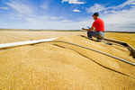 a man uses a tablet in the back of a grain truck during the durum wheat harvest, near Ponteix, Saskatchewan, Canada