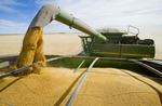 a combine augers durum wheat into a grain wagon on the go during the harvest, near Ponteix, Saskatchewan, Canada