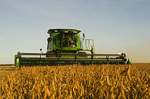 a combine harvester harvests soybeans near La Salle, Manitoba, Canada
