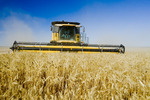 durum wheat harvest, near Ponteix, Saskatchewan, Canada