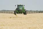 a high clearance sprayer applies preharvest herbicide on mature  wheat