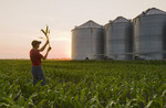 a farmer examines corn in field of feed/grain corn with grian storage bins in the background