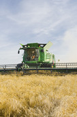 a combine harvester works a field during the wheat harvest