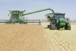 a combine harvester straight cuts in a  mature standing field of canola during the harvest and unloads into a grain wagon on the go