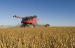soybean harvest near Dugald, Manitoba, Canada