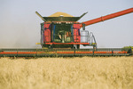 spring wheat harvest, near Dugald, Manitoba, Canada