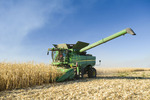 a combine harvester during the feed corn harvest