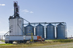 trucks hauling crop to an inland terminal, near Winnipeg, Manitoba, Canada