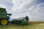 a combine harvester straight cuts in a  mature standing field of canola during the harvest, near Niverville, Manitoba, Canada