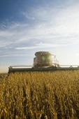 soybean harvest, near Grande Pointe, Manitoba, Canada