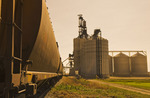 loading grain at inland grain terminal, Swift Current, Saskatchewan , Canada