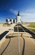 farm truck hauling field peas to an inland grain terminal, Swift Current, Saskatchewan , Canada
