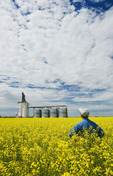 man in bloom stage canola field with inland grain terminal in the background, Morris, Manitoba, Canada