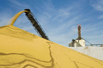 stockpiling soybeans during the harvest at an  Inland grain terminal, near Winnipeg, Manitoba, Canada