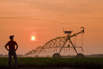a man looks on as a center pivot irrigation system irrigates potatoes,Tiger Hills, Manitoba, Canada