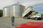 a man walks towards with a set of newly erected grain storage bins as one is loaded with winter wheat, near Kane,  Manitoba, Canada
