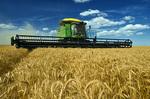 winter wheat harvest near Kane, Manitoba, Canada