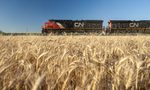 locomotives pass a mature spring wheat field near Dufresne, Manitoba, Canada