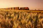 rail cars carrying containers pass a spring wheat field near Dufresne, Manitoba, Canada