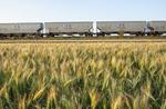 rail hopper cars carrying grain pass a spring wheat field near Dufresne, Manitoba, Canada