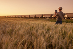 a man uses a tablet in a mature  wheat field next to a passing train pulling hopper cars , near Dufresne, Manitoba