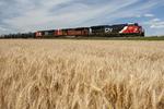 a train  passes  a mature spring wheat field near Dufresne, Manitoba, Canada