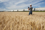 a man using a tablet in a spring wheat field near a passing train  pulling hopper carss , near Dufresne, Manitoba, Canada