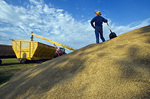 stockpiled oats are augured into a grain wagon near Lorette, Manitoba, Canada
