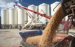 unloading pea from a farm truck during the harvests and augering them into a grain storage bin, near Lorette,  Manitoba, Canada