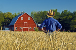 a man looksout over a harvest ready spring wheat field with a red barn in the background , Grande Pointe,  Manitoba, Canada
