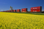 moving rail cars carrying containers pass a canola field and inland grain terminal near Portage la Prairie, Manitoba, Canada