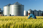 a farmer in spring wheat field/ grain storage bins in the background, near Dugald, Manitoba, Canada