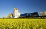 a moving locomotive passes a canola field and inland grain terminal near Portage la Prairie, Manitoba, Canada