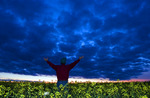 a man looks out over a field of bloom stage canola and dramatic clouds after sunset, near Dugald, Manitoba, Canada