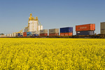 rail cars carrying containers pass a canola field and inland grain terminal near Portage la Prairie, Manitoba, Canada