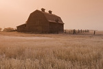 frosty morning,abandoned farm near Ponteix, Saskatchewan, Canada