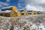 hay rolls, near Hazenmore, Saskatchewan Canada