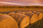 hay rolls, near Winnipeg, Manitoba