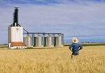 durum wheat field, inland grain terminal, Assiniboia, Saskatchewan , Canada