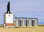 durum wheat,  inland grain terminal, Assiniboia, Saskatchewan , Canada