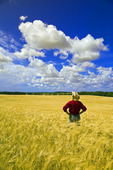 a man looks out over a maturing barley crop and sky filled with cumulus clouds, Tiger Hills, Manitoba, Canada