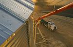 storing soybeans in a grain storage bin, near Lorette,  Manitoba, Canada