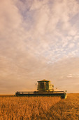 soybean harvest near Oakbank, Manitoba, Canada