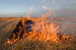 wheat stubble burning near St. Agathe, Manitoba, Canada